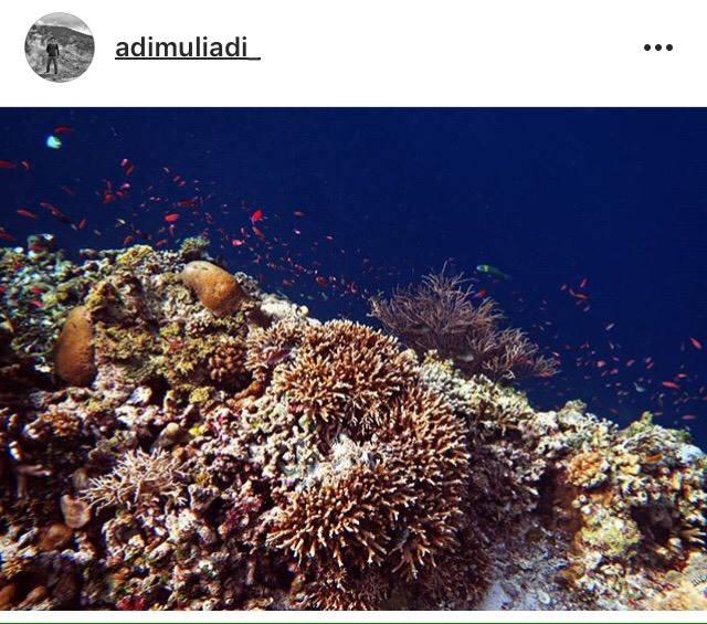 Pemandangan bawah laut Kapoposang